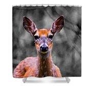 Whitetail Doe Shower Curtain