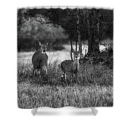 Whitetailed Deers Shower Curtain
