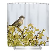 Whitethroat  Shower Curtain