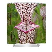 Whitetop Pitcherplant Shower Curtain
