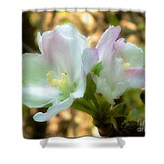 Who Here Has Seen Apple Blossoms In Late Summer Shower Curtain