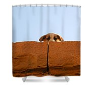 Who Is Looking? Shower Curtain