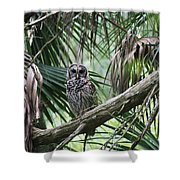 Whoooo Are You Shower Curtain by April Wietrecki Green
