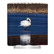 Whooper Swan 2 Shower Curtain