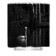 Whooper Swan In Bw 1 Shower Curtain