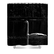 Whooper Swan In Bw 2 Shower Curtain