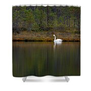 Whooper Swan  Shower Curtain