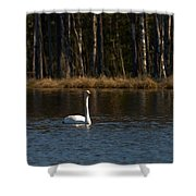 Whooper Swan Of Liesilampi 3 Shower Curtain