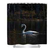 Whooper Swan Of Liesilampi 5 Shower Curtain