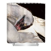 Whooper1 Shower Curtain