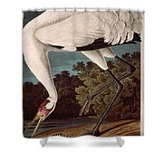 Whooping Crane Shower Curtain