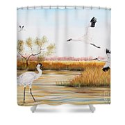 Whooping Cranes-jp3151 Shower Curtain