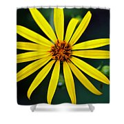 Whorled Rosinweed Shower Curtain