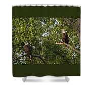 Who's Bald? Shower Curtain