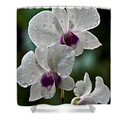 Whte Orchids Shower Curtain