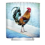 Why Did The Chicken... Shower Curtain