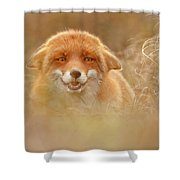 Why So Serious - Funny Fox Shower Curtain