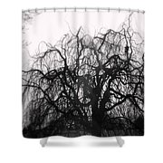 Wickedly Beautiful Shower Curtain