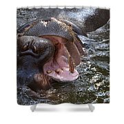 Wide Load Shower Curtain