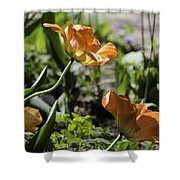 Wide Open Tulips Shower Curtain