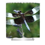 Widow Skimmer Dragonfly Shower Curtain