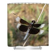Widow Skimmer Dragonfly Male Shower Curtain