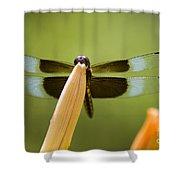 Widow Skimmer Shower Curtain