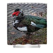Wierd Muscovy Duck Shower Curtain