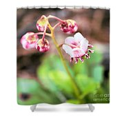 Wild And Beautiful 5 Shower Curtain