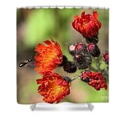 Wild And Beautiful 3 Shower Curtain