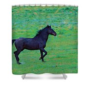 Wild And On The Go Shower Curtain