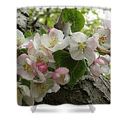 Wild Apple Blossoms Shower Curtain