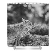 Wild Shower Curtain