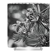 Wild Aster And Honey Bee Bw Shower Curtain