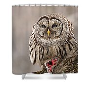 Wild Barred Owl With Prey Shower Curtain