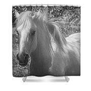 Wild Beauty Bw Shower Curtain