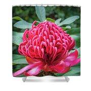 Wild Beauty Watarah Shower Curtain