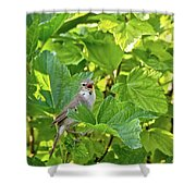 Wild Bird In A Currant Bush. Shower Curtain