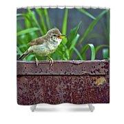 Wild Bird In A Natural Habitat.  Shower Curtain