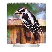 Wild Birds - Downy Woodpecker  Shower Curtain