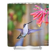 Wild Birds - Hummingbird Art Shower Curtain