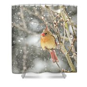 Wild Birds Of Winter - Female Cardinal In The Snow Shower Curtain