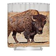 Wild Bison Shower Curtain