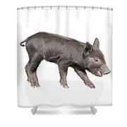 Wild Black Piglet Shower Curtain