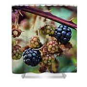 Wild Blackberries Shower Curtain