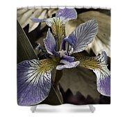 Wild Blue Iris Shower Curtain