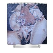 Wild Boar And Dogs Shower Curtain