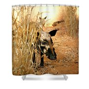 Wild Boar Shower Curtain