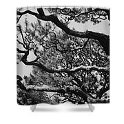 Wild Branches Shower Curtain