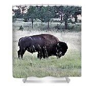 Wild Buffalo Shower Curtain